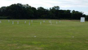 field-cricket